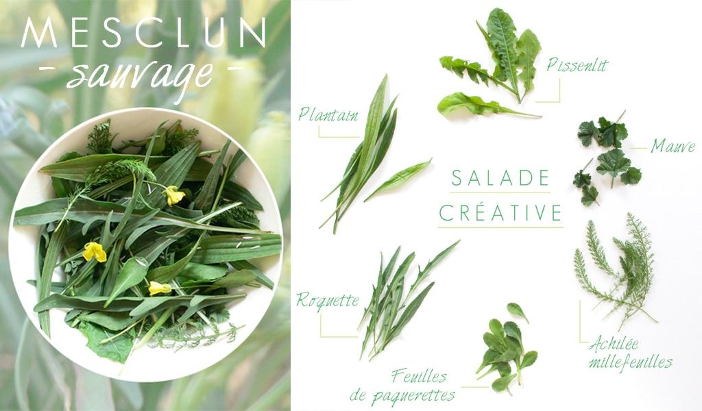mesclun-de-plantes-sauvages