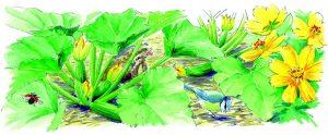 biodiv dessin Rustica