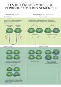 FDA-semences-hybrides