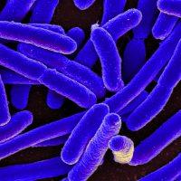 Minéralisation : les micro organismes du sol dégradent la matière organique.