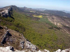 Une hêtraie en Provence: dans la forêt de la Sainte Baume, grâce au microclimat frais de l'ubac (flanc nord des montagnes) une forêt de hêtres se maintient dans une région dont le climat général ne lui conviendrait pas du tout.
